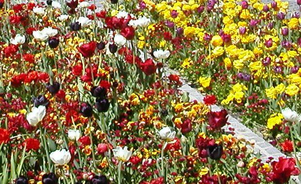 Parfum-de-fleurs-printemps11